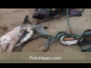 Рыбаки поймали мертвую сельдевую акулу