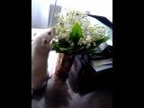 все девочки любят цветочки
