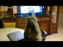 Коты-попрошайки