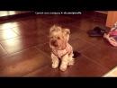 «С моей стены» под музыку Виктория победительница - Freak the  Freak out ( 1 сезон - 13 -14 серия ). Picrolla