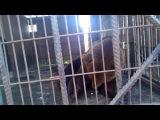Мишки на выезде из Омска))