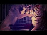 Jahongir Otajonov - Arslonman (Official HD Clip) - YouTube