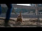 Дружба собаки и лошади