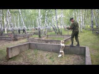 Собака и вица-сержант