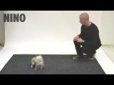 Как собаки реагируют на лающего человека