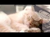 «Со стены Мяука.ру | Всё о кошках: статьи, видео, картинки» под музыку Элвин и бурундуки [vkhp.net] - давай танцуй. Picrolla