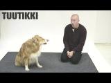 Как собаки реагируют на