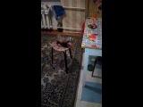 Лекс уже и на стулья научился залазить а там и на стол:D