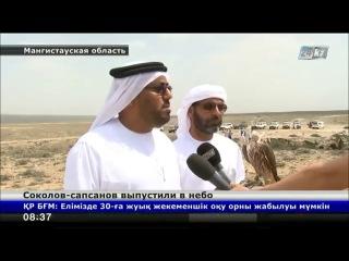 Делегация из Арабских Эмиратов выпустила в мангистауские просторы сотню соколов-сапсанов