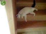 Жидкий кот(music by Nina)))