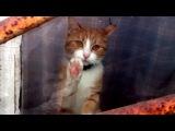 Самый грустный кот в мире
