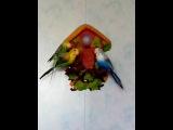Мой попугай разговаривает с другими сородичами-роботами!)