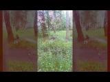Кобальт 1 видео_01