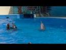 дельфины и люди ч.1