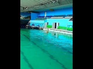 Последний рабочий день в питерском дельфинарии