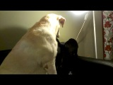 Нора и кошки