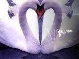 Два белых лебедя - Владимир Захаров и Рок - острова