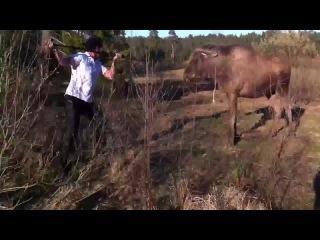 Что делать, если в лесу к вам приебался лось