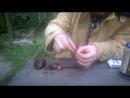 Гавр против маньчжурского ореха