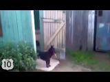 ТОП-10. САМАЯ СМЕШНАЯ подборка видео с СОБАКАМИ 2014