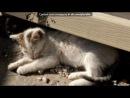 «Красивые Фото • fotiko» под музыку Май литл пони - песня искорки.