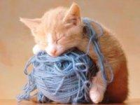 """Предпросмотр схемы вышивки  """"Рыжик в нитках """".  Рыжик в нитках, пушистик, кот, котенок."""