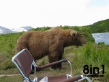 Бурый медведь пришёл посидеть рядом с рыбаком и ушёл, Аляска / Incredible Up-Close Encounter With Alaskan Brown Bear