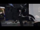 Lanfren - Lanfra совместный проект аудиомастеринг Татьяна Никитина видеомонтаж ~ SASH™~ HD Studio StarStalker 2014