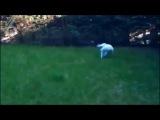 Кот отрабатывает вертуху (6 sec)