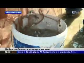 Атырау облысында майда шабақтар қырылуға жақын