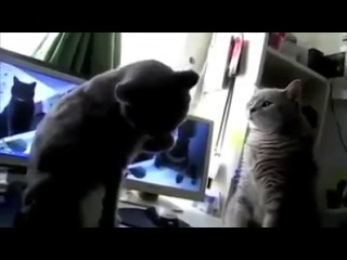 Talking Cats Play Pattycake!