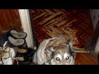 «я моя собака» под музыку Т. Буланова-Опустела без тебя земля... - Как тяжело без тебя!!! Вечная и светлая память тебе!!!!. Picrolla
