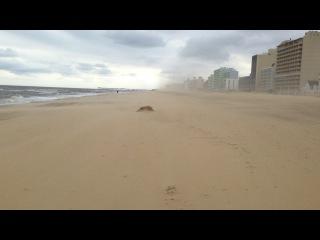 Нас с носиком сдувает легкий ветерок с Атлантического океана, Штат Вирджиния, США