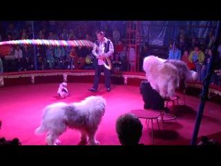 Выступление в Пыть-Яхе 11 июля, цирк шапито из Воронежа, дресированные собачки)