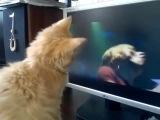 Котенок слушает эмокор