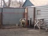 Собака танцует в Караганде, район - Михайловка