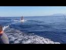 Стая дельфинов настигла девушку в открытом море!!! =)