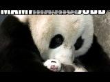 С моей стены под музыку Лолита feat. Quest Pistols - Ты Похудела (НОВАЯ ПЕСНЯ!). Picrolla