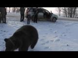 Ручной медведь в Азовском районе Ростовской области, 2012