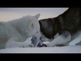 Белый плен-ХОРОШИЙ ФИЛЬМ (2006-2005, СМОТРЕЛА В 98Г) 720HD