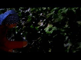 фільм про вирощування винограду на ШАБО