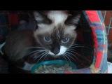 Даша,после операции....Кошке больно,она плачет постоянно..