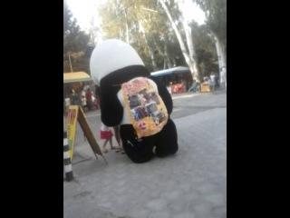 Панда налётчица D
