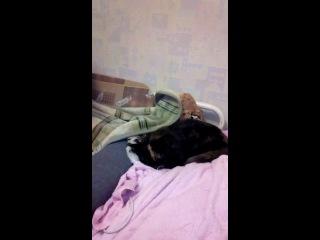 Моя кошка полностью отрубилась