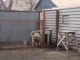 Собака танцует под музыку модерн токинг