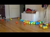 Неожиданный подарок на день рождения собаке