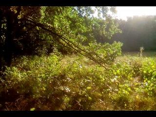 Ролики из серии: Лики Солнца, август 2014