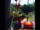 I'm so excited ^^ Эта маленькая шнековая соковыжималочка lexen healthyjuicer конечно сделала наше лето в этом году Просто мастхэв ящетаю вот просто искренне рекомендую А уж когда приезжаешь на дачу да она настолько маленькая и легкая что ее очень удобно брать с собой на дачу и в путешествия Фреш из сладких фруктов и только что сорванной зелени базилик шпинат сельдерей петрушка эстрагон укроп мята мелисса всякий разный салат а ещё подорожник листья одуванчика смородины и малины ревень это просто Оммм оммм оооммм ой то есть омномном какой то а как полезно словами не сказать И что интересно можно целый день такие соки пить и даже есть не хочется В общем что я имею вам сказать Во первых если вы тоже хотите такую пишите на мой мэйл ваши контактные данные отправляют по всей стране 2500 ру без учета доставки стоимость которой зависит от вашей дислокации Подробное описание чем отличается от других что и как отжимает и еще одно видео с этим прекрасным девайсом можно найти по тегу healthyjuicervideo Во вторых я хочу провести для вас очень простой и очень приятный giveaway и подарком будет как вы догадываетесь такая соковыжималка Подробности следующим постом healthyjuicer giveaway