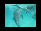 Озабоченный дельфин