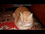 Придумайте смешное описание к фото, на понравившийся комментарий под музыку Кот - Реп про Олесю. Picrolla